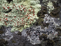 A close up of lichen
