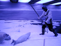 Diorama of seal hunting