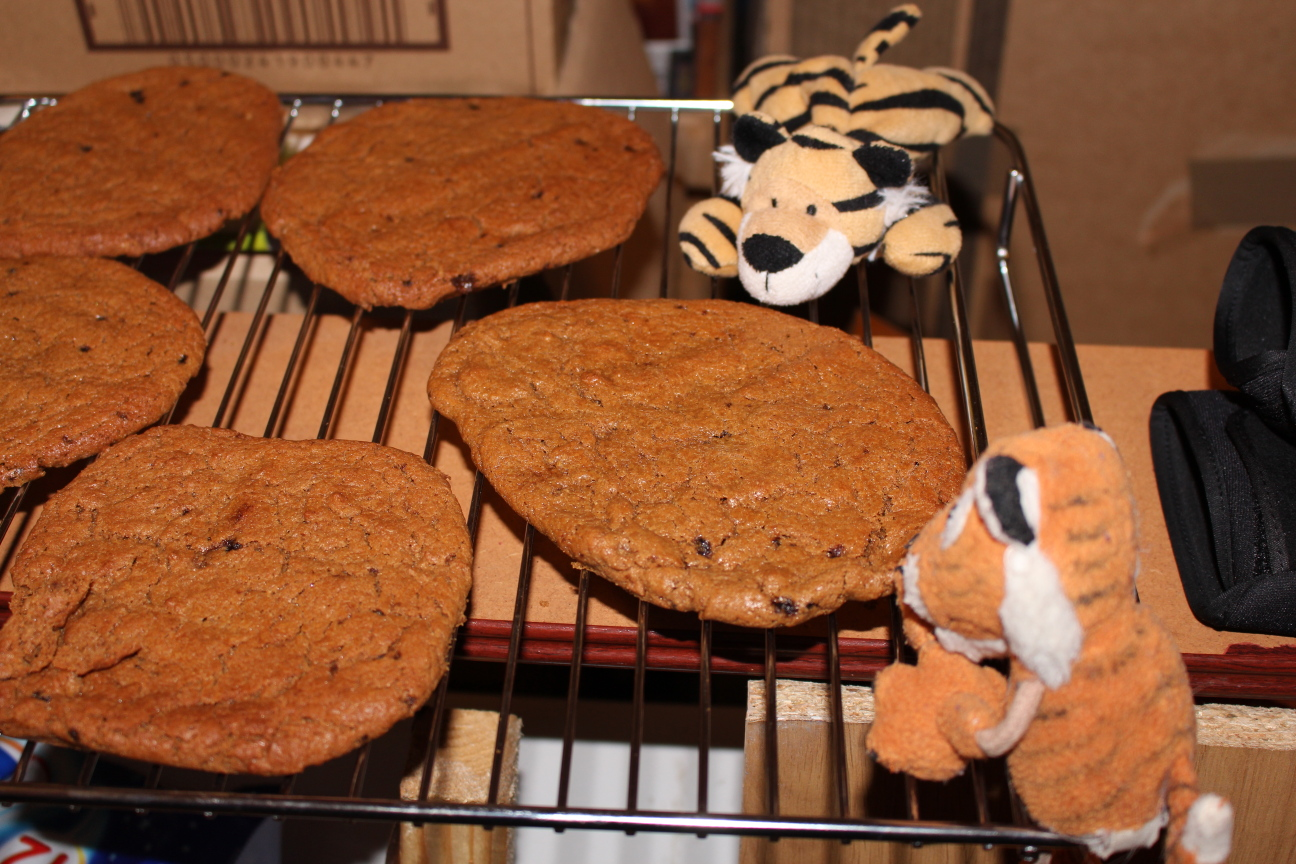 The smaller tigers eagerly wait for the cookies to be cool enough to eat
